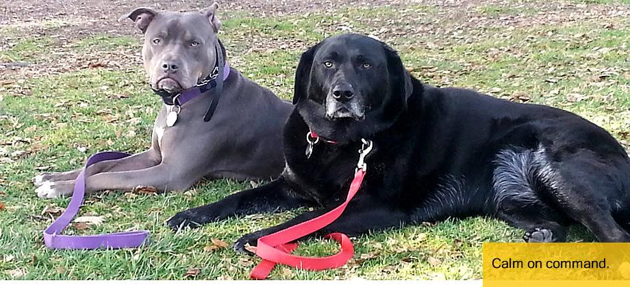 Dog Trainer in Redding, California